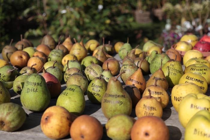 anciennes variétés pommes poires